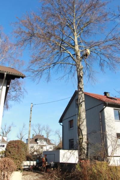 Baumpflege Kammermeier